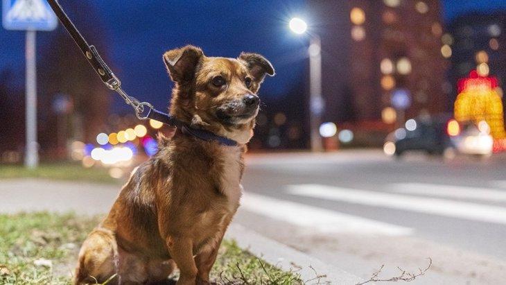 犬の『夜のお散歩』で絶対にしてはいけないNG行為4選