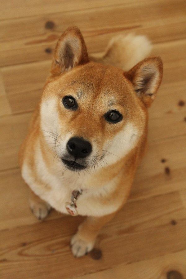 犬を幸せにできる飼い主が持つ4つの共通点