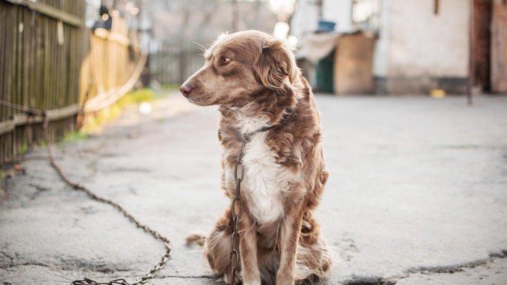 気付いていますか?犬の『不安サイン』3選