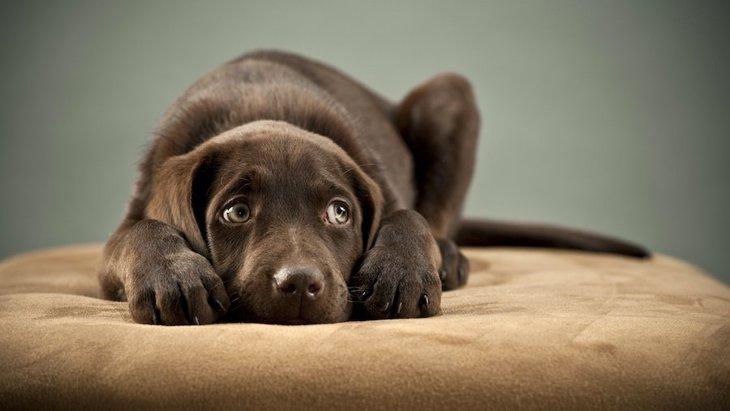 犬がする『奇妙で怖い行動』4選!もしかして、おばけが見えてるの…?