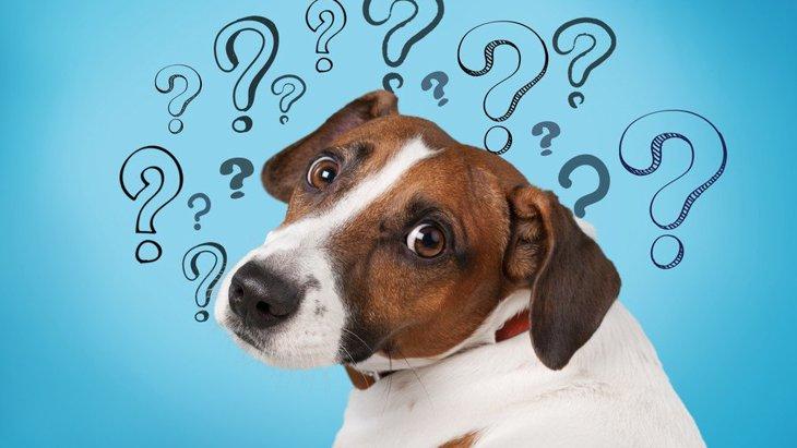 犬が困っている『飼い主の行動』3選!実はこんな行為が愛犬を困惑させていた!
