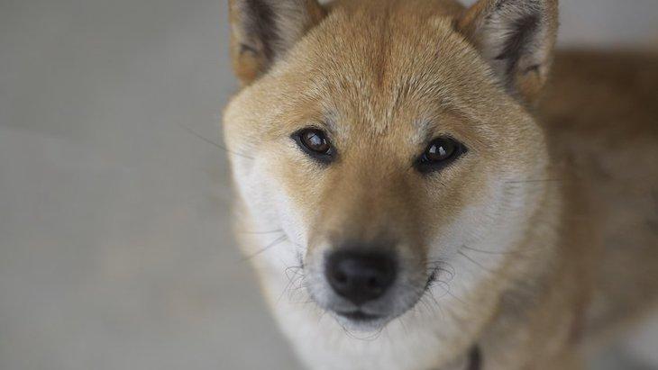 犬から『要求』や『催促』をされた時の正しい対処法とは?