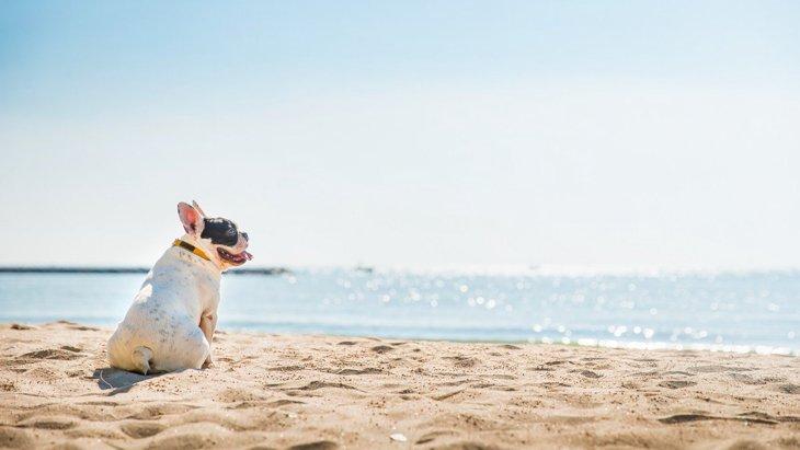 夏に注意すべき犬の『皮膚トラブル』4選!家でできる予防とケアとは