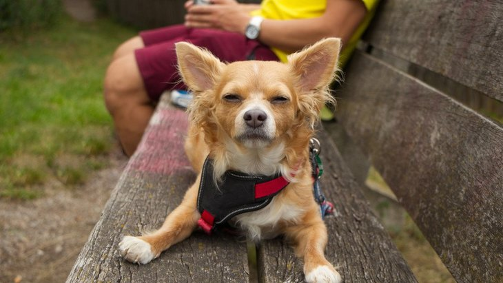 飼い主以外に懐かない犬が反抗的な態度をとるときの対処法