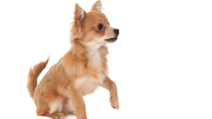 愛犬が前足を片方あげているときの4つの気持ち