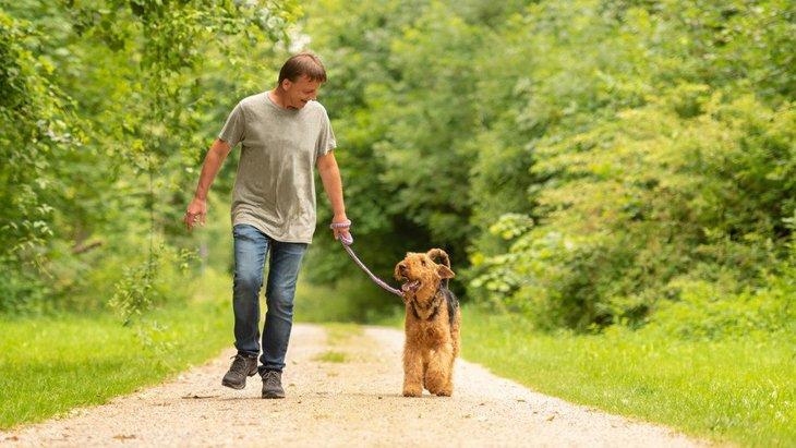 犬の散歩中の仕草でわかる『飼い主への愛情度』4項目