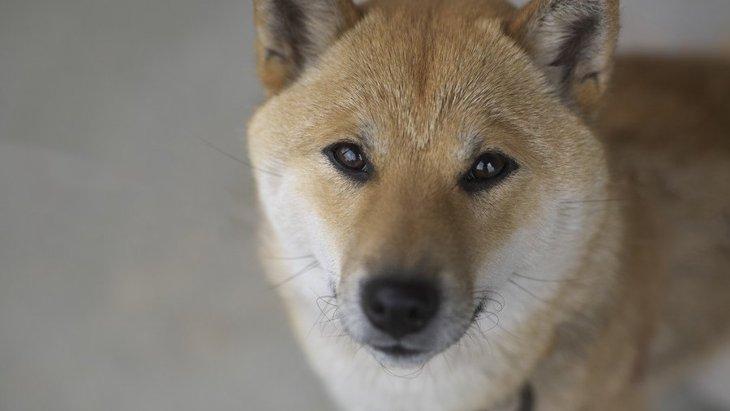 犬が『不安』になる原因4つ!なるべく愛犬につらい思いをさせないように