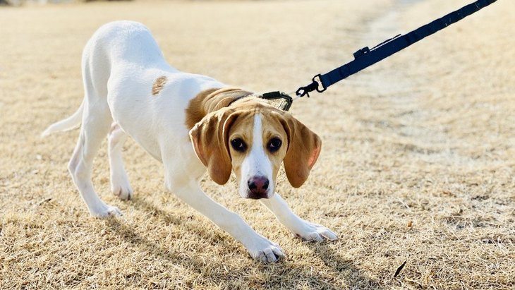 犬が『反抗期』に見せる行動とは?状況別の対応からNG行為まで解説