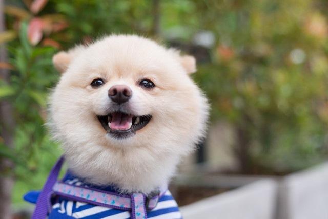夏でも犬に服を着せた方がいいのか?
