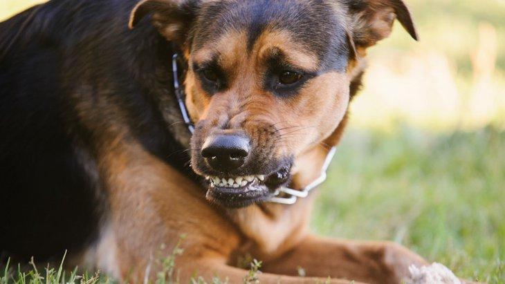 犬が急に唸る4つの心理と対処法