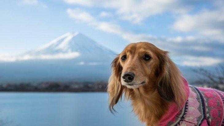 【本栖湖】愛犬と入れるレストラン「本栖館」で山梨名物を