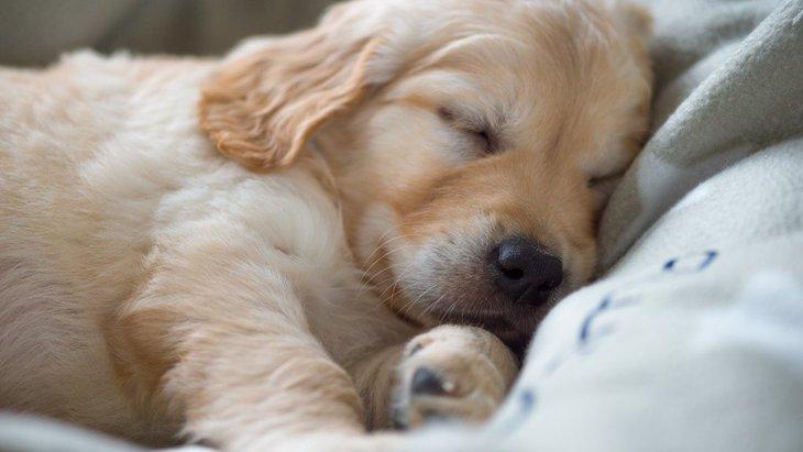 犬を快適に眠らせるために飼い主ができること5つ