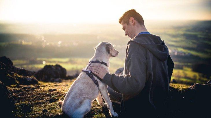 犬が『懐いてくれない!』主な原因と、仲良くなるための秘策を解説