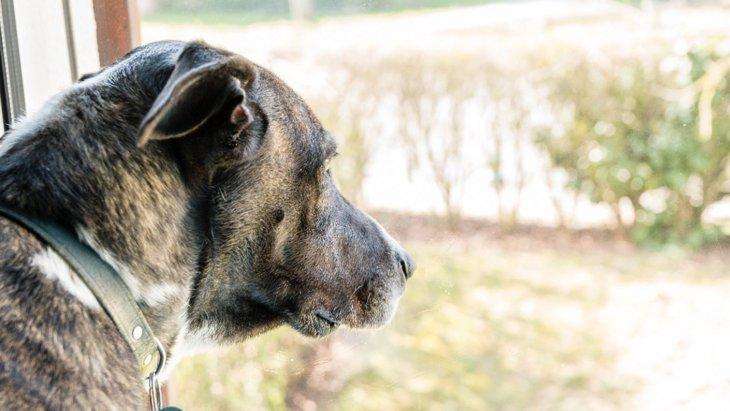実は増えている犬の『うつ病』!発症する原因と症状3選