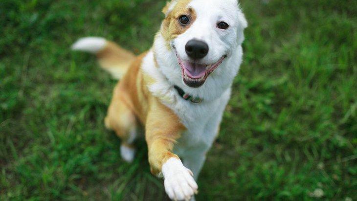 犬の立ち上がり方が変なときに考えられる病気とは?