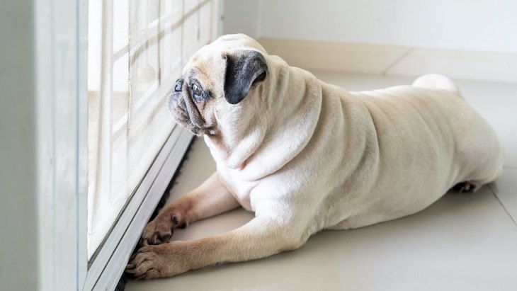 犬が留守番してる時は、電気はつけておいたほうがいいの?