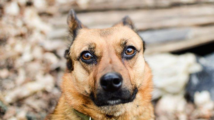 米国籍の私が見てきた日本人と犬の関係 ~昭和の番犬から平成の家族へ~