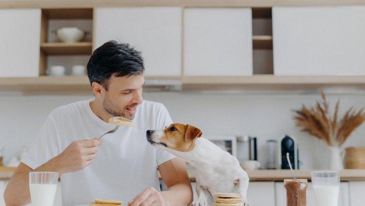 あなたはやってない?犬に『ご飯を与える時の絶対NG行為』5選