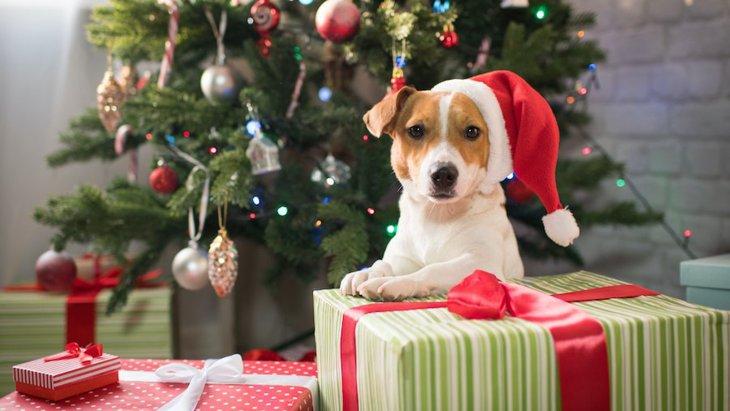 クリスマスを愛犬と楽しむためのルール3つ