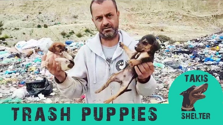 ゴミの中の子犬たち。命を粗末にするのはもうやめて!