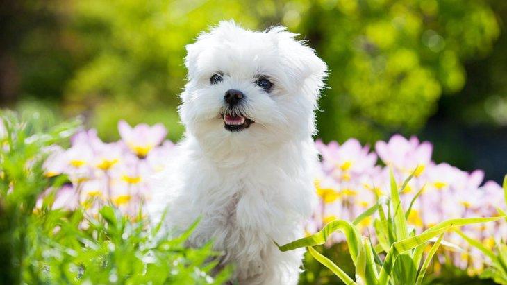 寿命が長い犬種3選!その理由や長生きの秘訣まで