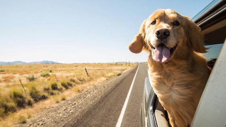 犬とのドライブを安全に!お出かけの注意点からおすすめの車用グッズまで