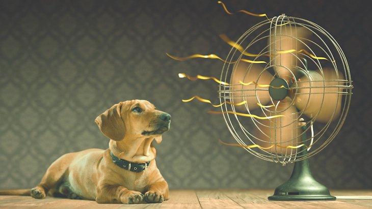 犬の熱中症対策はいつまでするべき?春や秋はどうしたらいいの?