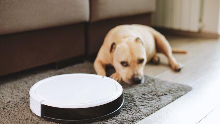 犬のいる家庭で『ロボット掃除機』を使うメリットと注意すべきこと