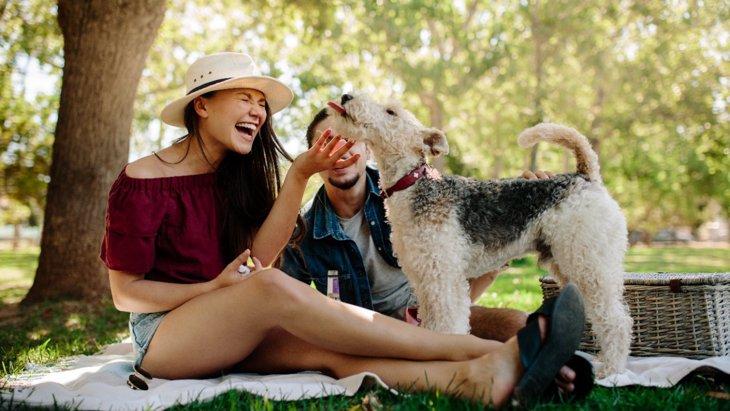 犬が『やきもちを妬いている時』にする仕草や行動4選