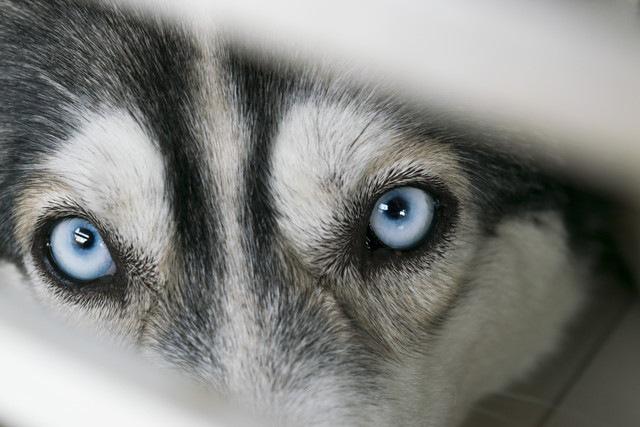 犬に咬まれた人に多く見られる特有の性格がある?リサーチからわかったこと
