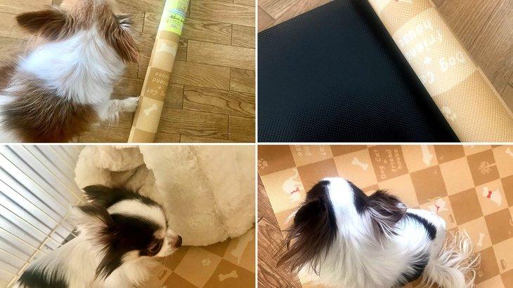 ペットの足腰の負担を軽減☆明和グラビア「防滑・消臭マット」を使ってみた!