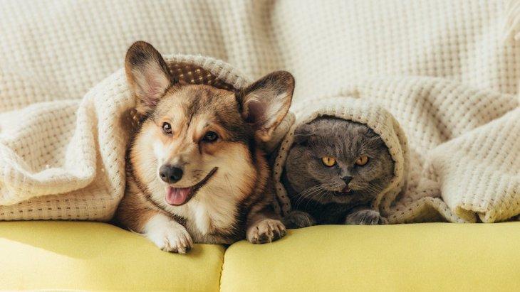 犬と猫は一緒に飼っても大丈夫?考えられるトラブルや快適に過ごしてもらうコツを解説