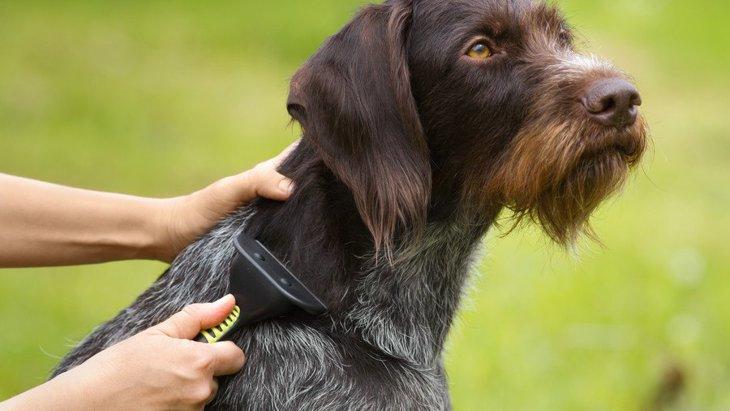 買ってはいけない『犬用グッズ』4選!愛犬に合わないNGなもの、買っていませんか?