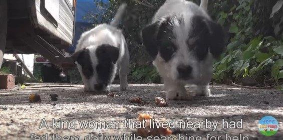 母犬が2週間帰ってこない…子犬5匹を保護!個性が違ってみんな可愛い♡