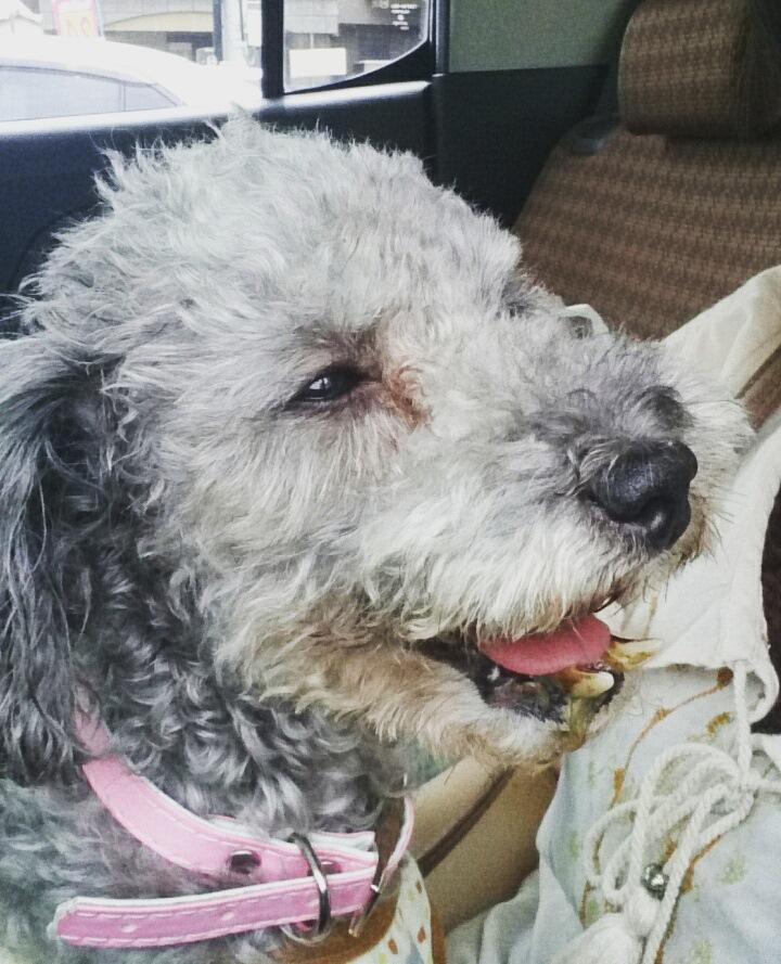 レスキュー犬『ララさん』の過去と現在