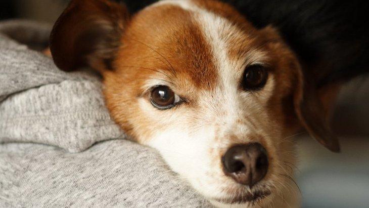 『独占欲』の強い犬がする仕草や行動3つ