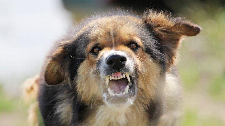犬がケージの中で暴れる理由と落ち着かせる方法