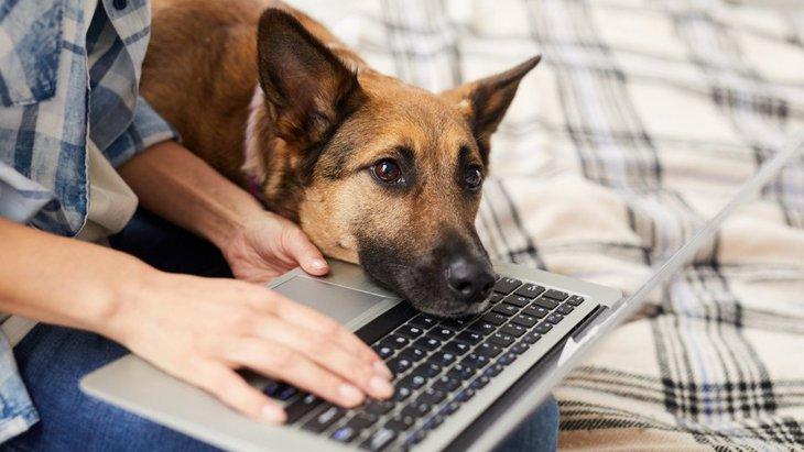 犬が『やきもち』を妬いている時のサイン4選