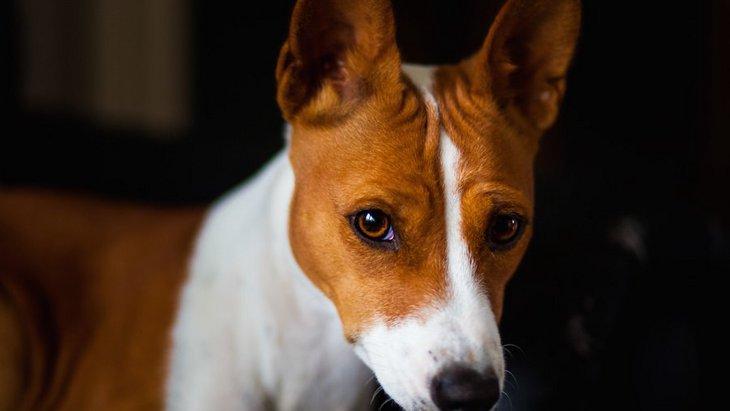 犬が眉間にシワを寄せている時の心理7つ