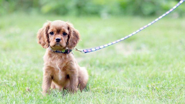 犬が散歩中に座って動かなくなる心理4選!歩かせるためにやるべきこととNG行為を解説