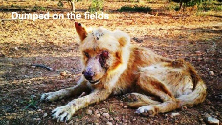 皮膚病のせいでゾンビと呼ばれた捨て犬をレスキュー。愛ある暮らしへ!
