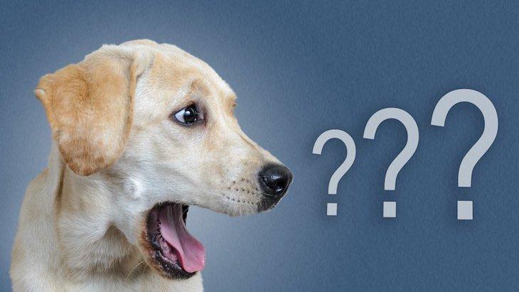 犬に『イタズラ』をしすぎてはいけない理由5つ