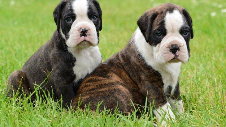 犬は何歳だって成長中!社会化は子犬だけのものじゃない