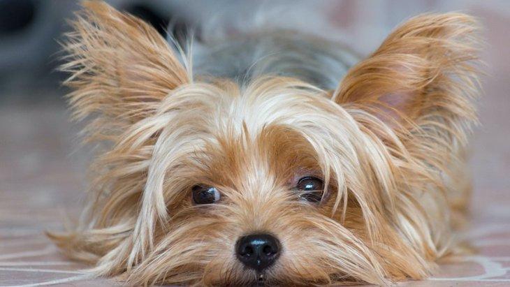 犬が感染しやすい病気3選!その原因や予防法とは