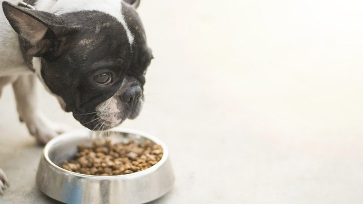 犬のご飯への食いつきが悪い原因4つと試してみたい対処法