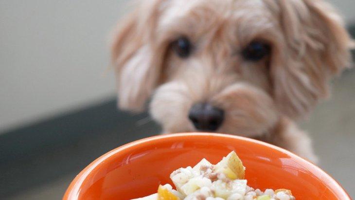犬のご飯のくいつきが悪い原因5選!病気になっていることも?