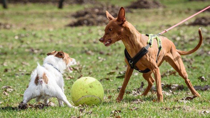 犬が散歩中に他の犬に吠える原因とやりたい対策
