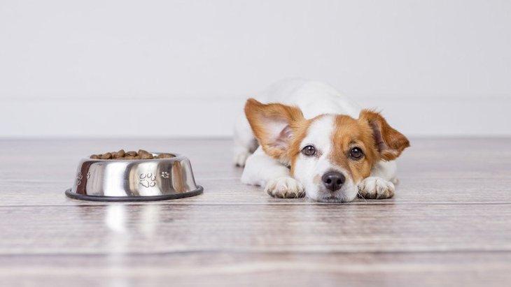 犬にご飯をあげる時にしてはいけないNG行為3選