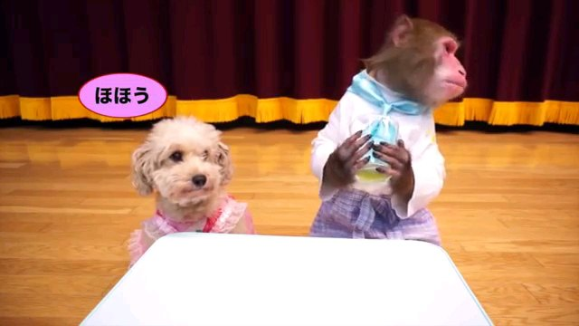 できるかな?ゴーヤージュースを作るワンちゃんとお猿さん