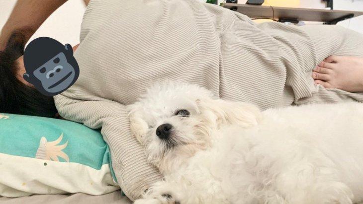 【あるある】可愛いペキビションさんのために寝返りを阻止!